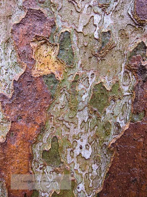 Barks (Tree Bark #2)